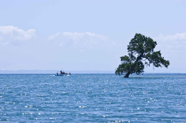 Tree grows in middle of sea; barangay Balete, Claveria, Burias Island, May 18, 2015. Photo by Jude Bautista
