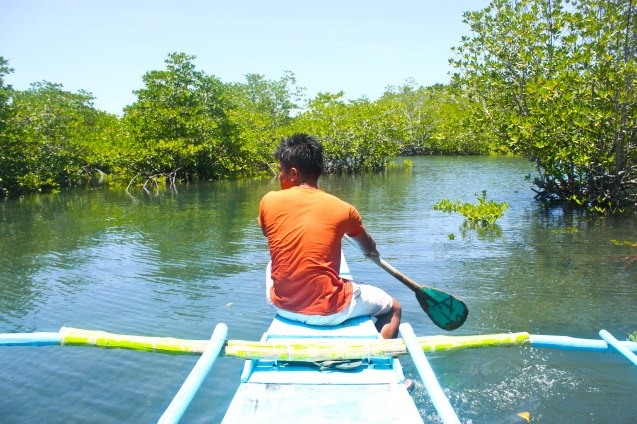 Mangroves in barangay Canomay, Claveria, Burias Island, May 18, 2015. Photo by Jude Bautista